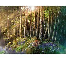 Fox Haven Photographic Print
