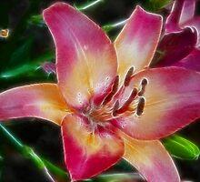 LILLYfractal by solareclips~Julie  Alexander