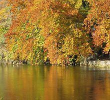 River Tweed Peebles Autumn Colours by rosie320d