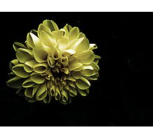 Evening Bloom Photographic Print