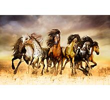 Magnificent Seven Galloping Horses Full Color  Photographic Print