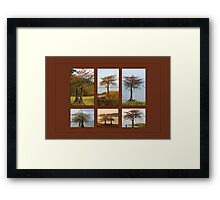 Cypress Trees in Fall Framed Print