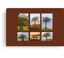 Cypress Trees in Fall Canvas Print