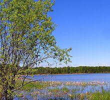 marsh tree by Cheryl Dunning