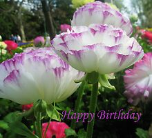 Purple Happy Birthday by Melissa Park