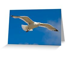 Freedom airline Greeting Card