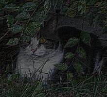 Kitty Cat by oo2bpooh