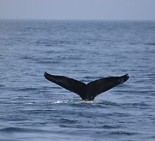 A Whale's Tail by arcadian7