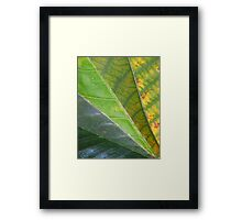 Spring Turns to Autumn Framed Print