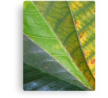 Spring Turns to Autumn Canvas Print