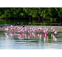 Spoonbill Convention Photographic Print