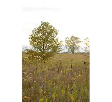 Meadow with Trees Photographic Print