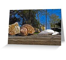 Shell Mantle Greeting Card