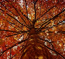 Fall colors by Jason Vickers