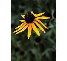 Wilting Flower Photographic Print