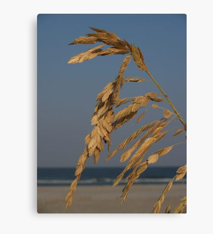 Sea Oats at Sunset, Hunting Island Canvas Print