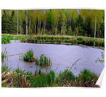 Beaver Pond in Spring Poster