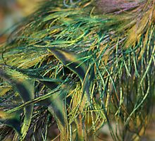 Could you Identify this?  Michelle got it right a Peacock!! by ZeeZeeshots