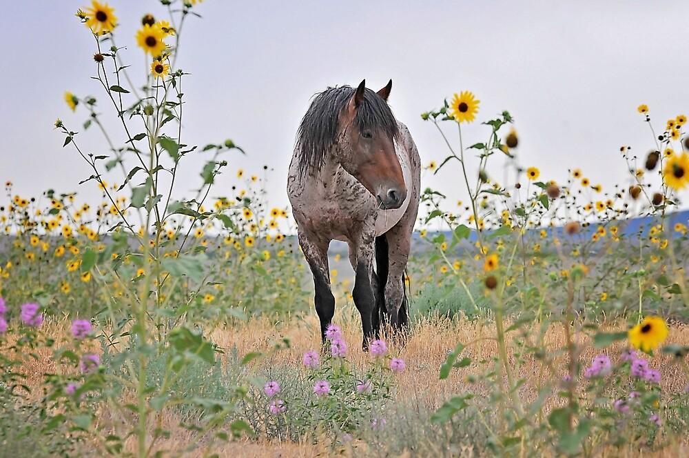 Roan Foal in Sunflowers by Kelly Jay