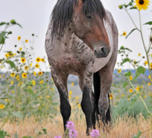 Roan Foal in Sunflowers Sticker