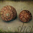 Sea Shells by Melanie  Dooley