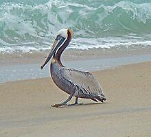 Brown Pelican - Pelecanus occidentalis by MotherNature2