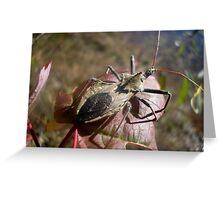 Stink Bug Greeting Card