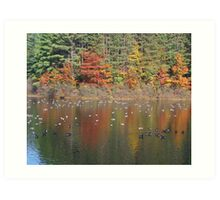 Canadian Geese In Autumn Art Print