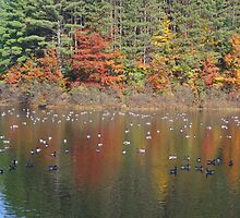 Canadian Geese In Autumn by SmilinEyes