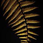 Gold1 by EbyArts