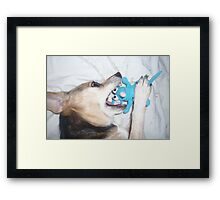 Pup at Play - Kill That Blue Mouse! Framed Print