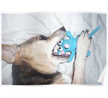 Pup at Play - Kill That Blue Mouse! Poster