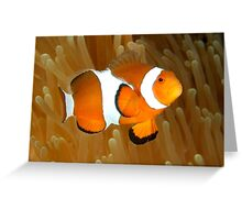 Western Clown Anemonefish Greeting Card
