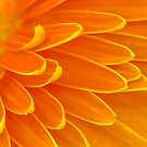 Gerbera Poems - The Divine Play of Creation by Prasad