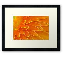 Gerbera Poems - The Divine Play of Creation Framed Print