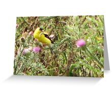 American Goldfinch Nest Building Greeting Card