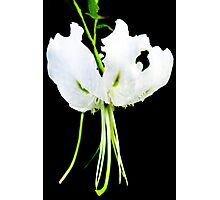 Glendurgan White Photographic Print