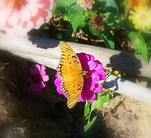 Butterfly Gardening by DottieDees