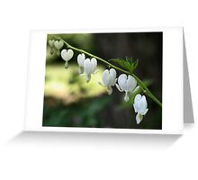 White Bleeding Hearts Greeting Card
