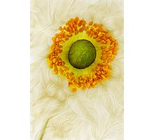 September Charm - A collaboration with Dave Edwards Photographic Print