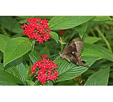Butterfly Passion Photographic Print
