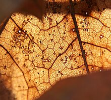 Veins of Leaves by LifeAndDeath15