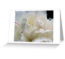 White Peony Up Close Greeting Card