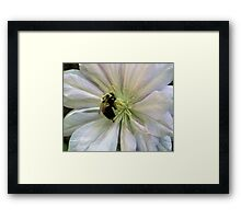 Bumble Bee On Clematis Framed Print
