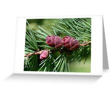 Baby Pine Cones Greeting Card