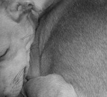 Sweet Dreams my Beautiful Puppy Sticker