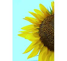 Sunflower Mint Photographic Print