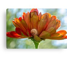 caught napping Canvas Print