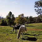 The Peaceful Life of a Horse! by NancyC