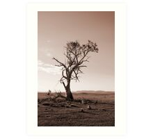 Lonely old Paddock Tree Art Print